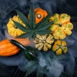 Marijuana Thanksgiving